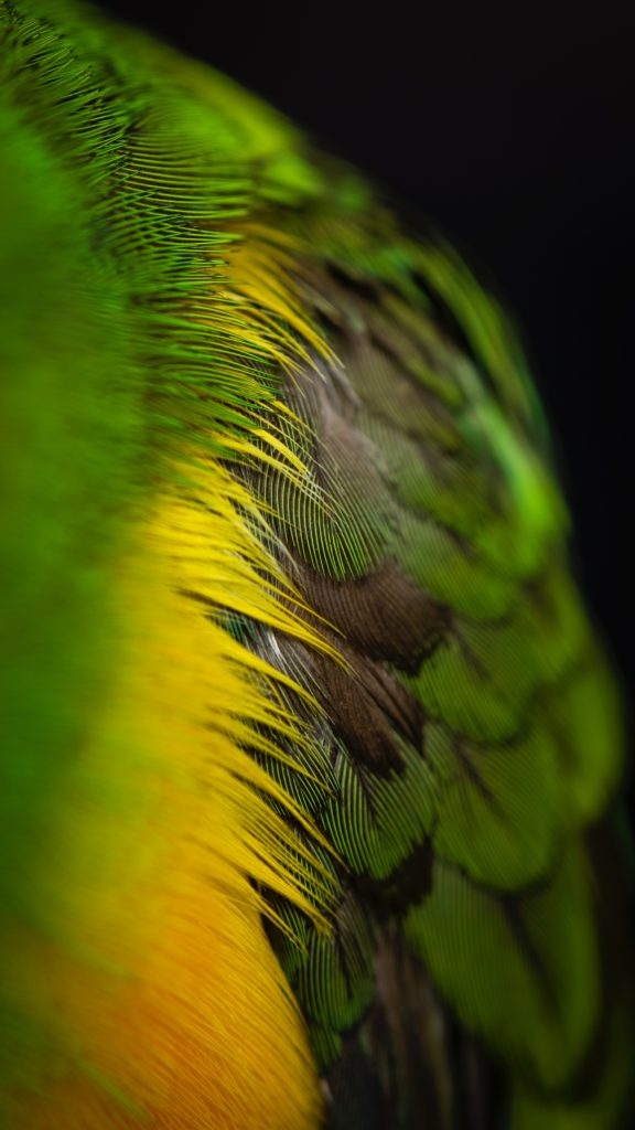 Image of a side of an animal with feathers